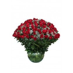 200 Optimum Red Rose
